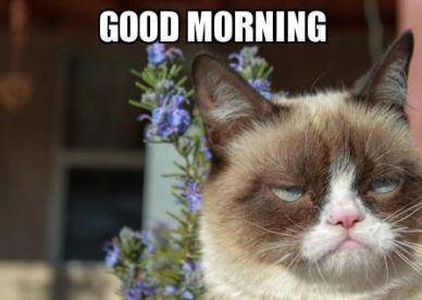 Funny Cat Good Morning Meme - Good Morning Images Wishes and Quotes