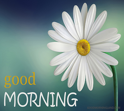 Good Morning Flower Images Free Download - Good Morning Images