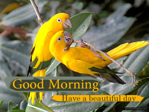 Good Morning Lovely Bird Images - Good Morning Images