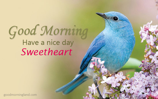 Good Morning Sweetheart Love Birds Images Good Morning Images, Quotes, Wishes, Messages, greetings & eCards