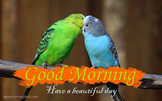 Have A Beautiful Day Morning Wishes With Romantic Birds