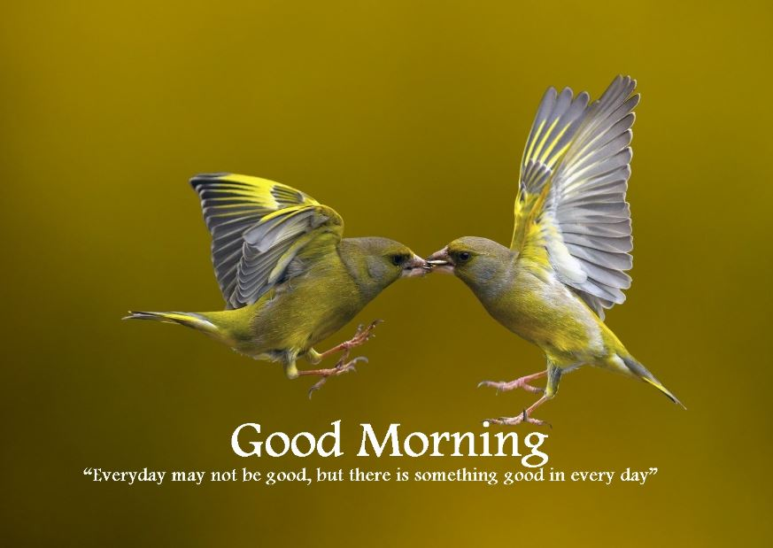 Good Morning Message Birds