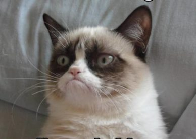 Funny Grumpy Cat Good Morning - Good Morning Images Wishes and Quotes