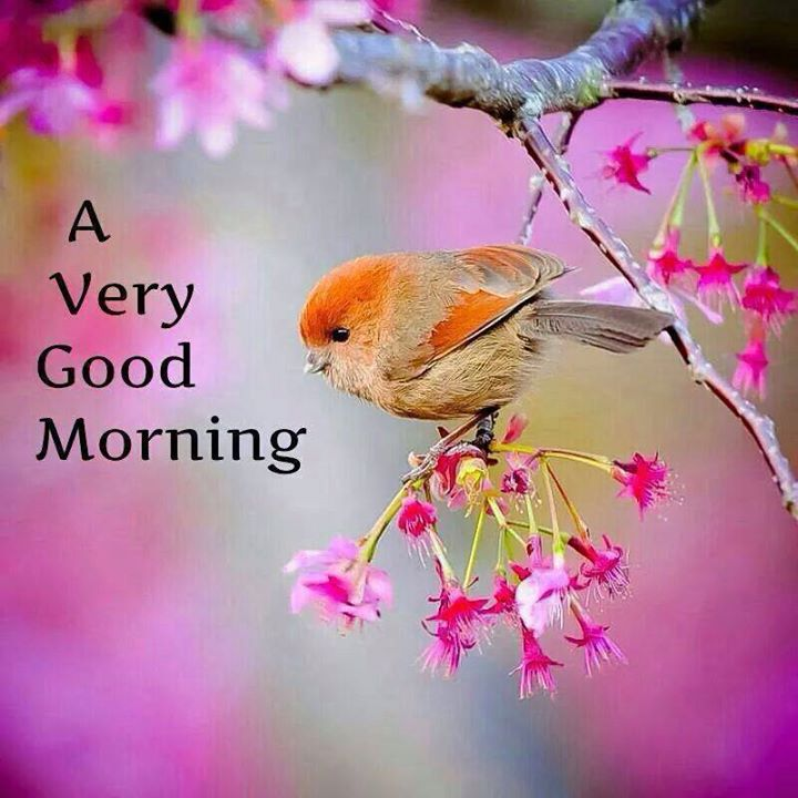 A Very Good Morning With A Beautiful Bird Images - Good