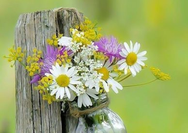 Awesome Flowers Images Of Good Morning Wishes Pic - Good Morning Images, Quotes, Wishes, Messages, greetings & eCards
