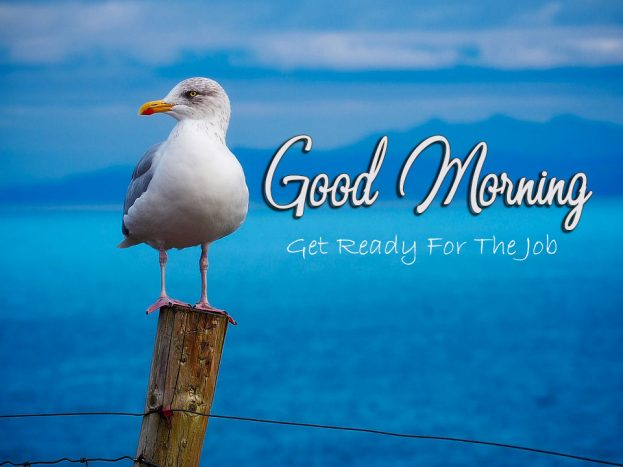 Best Good Morning Wishes With Birds Pic -Good Morning Images, Quotes, Wishes, Messages, greetings & eCard