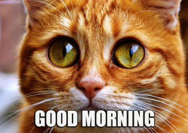 Funny Cat Good Morning Images - Good Morning Images, Quotes, Wishes, Messages, greetings & eCards