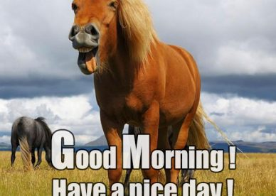 Funny Good Morning Have A Nice Day Greetings Picture - Good Morning Images, Quotes, Wishes, Messages, greetings & eCards