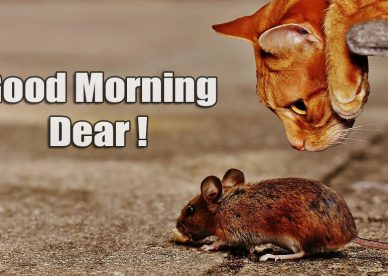 Funny Pic Of Good Morning Dear - Good Morning Images, Quotes, Wishes, Messages, greetings & eCards
