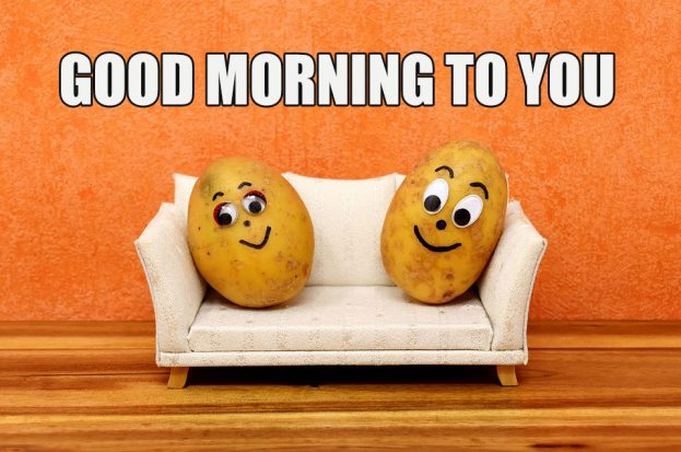 Funny Pic Of Good Morning To You - Good Morning Images, Quotes, Wishes, Messages, greetings & eCards
