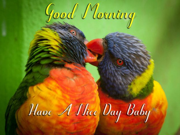 Good Morning Birds Have A Nice Day Baby - Good Morning Images, Quotes, Wishes, Messages, greetings & eCard