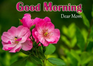 Good Morning Dear Mom Images - Good Morning Images, Quotes, Wishes, Messages, greetings & eCard