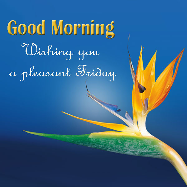 Good Morning Friday Wishes Images - Good Morning Images, Quotes, Wishes, Messages, greetings & eCards