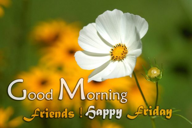 Good Morning Friends Happy Friday Images - Good Morning Images, Quotes, Wishes, Messages, greetings & eCards