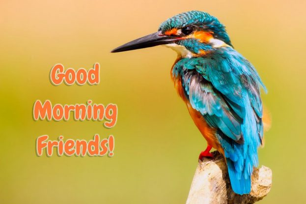 Good Morning Friends Wishes With Birds Pics - Good Morning Images, Quotes, Wishes, Messages, greetings & eCards