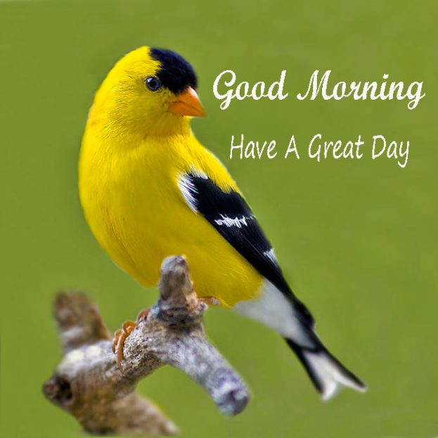 Good Morning Have A Great Day Birds Images - Good Morning Images, Quotes, Wishes, Messages, greetings & eCards