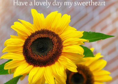 Good Morning Have A Lovely Day Sweetheart Yellow Sunflowers Photos - Good Morning Images, Quotes, Wishes, Messages, greetings & eCards
