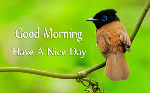 Good Morning Have A Nice Day With Cute Birds Images - Good Morning Images, Quotes, Wishes, Messages, greetings & eCards