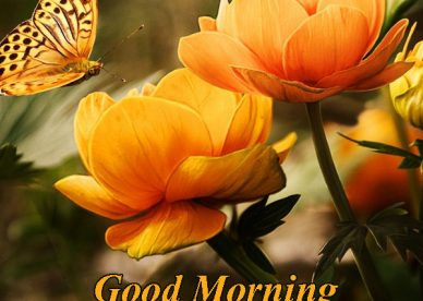 Good Morning Have A Nice Day Wishes With Rose - Good Morning Images, Quotes, Wishes, Messages, greetings & eCards