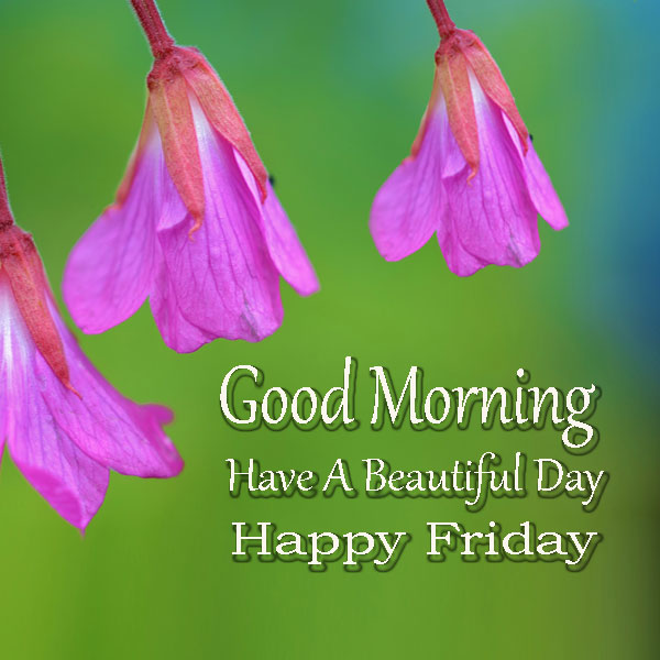 Good Morning Happy Friday Pictures Have A Beautiful Day - Good Morning Images, Quotes, Wishes, Messages, greetings & eCards
