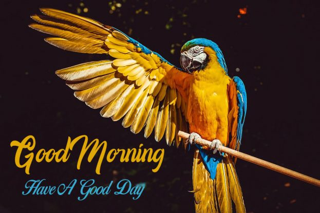 Good morning Have A Good Day With Birds - Good Morning Images, Quotes, Wishes, Messages, greetings & eCard