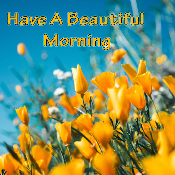 Have a beautiful morning flowers images good morning images have a beautiful morning flowers images good morning images quotes wishes messages greetings ecards m4hsunfo