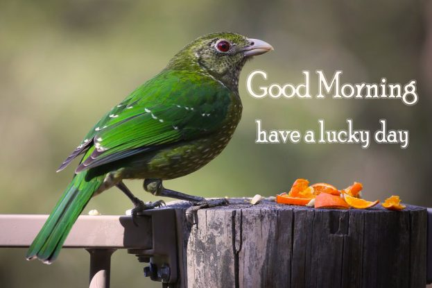 Have A Lucky Day Good Morning Birds Images - Good Morning Images, Quotes, Wishes, Messages, greetings & eCards