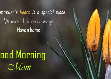 Good Morning Mom Meme Good Morning Images Quotes Wishes