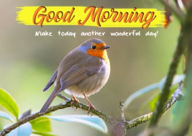 Download Good Morning Wishes With Birds Images - Good Morning Images, Quotes, Wishes, Messages, greetings & eCard
