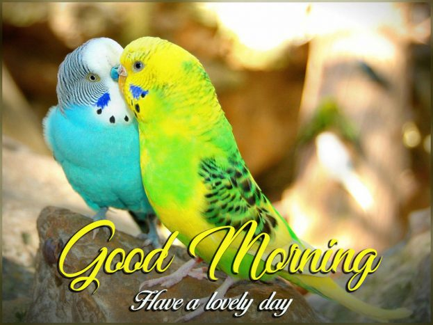 Good Morning Have A Lovely Day - Good Morning Images, Quotes, Wishes, Messages, greetings & eCard