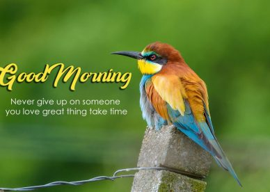 Good Morning Love Birds Images - Good Morning Images, Quotes, Wishes, Messages, greetings & eCard
