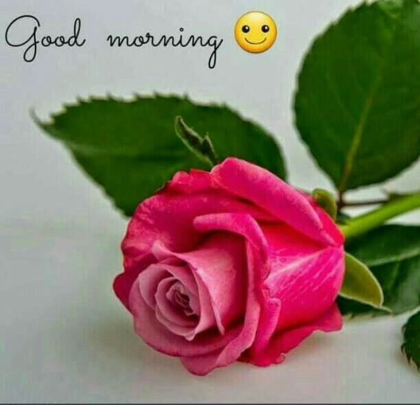 Good Morning Romantic Red rose - Good Morning Images, Quotes, Wishes, Messages, greetings & eCard