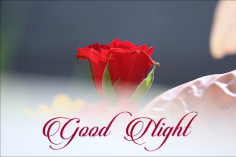 Cute Good Night Red Rose - Good Morning Images, Quotes, Wishes, Messages, greetings & eCard Images