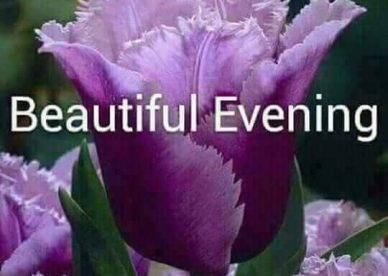 Beautiful evening Images - Good Morning Images, Quotes, Wishes, Messages, greetings & eCard Images