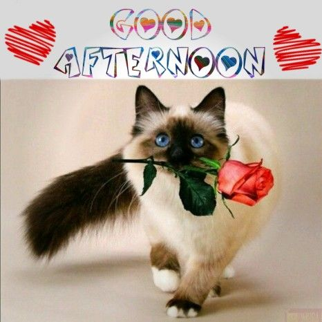Good Afternoon Lovely Kitty - Good Morning Images, Quotes, Wishes, Messages, greetings & eCard Images