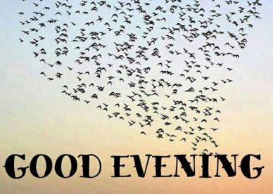 Good Evening Images With Birds - Good Morning Images, Quotes, Wishes, Messages, greetings & eCard Images