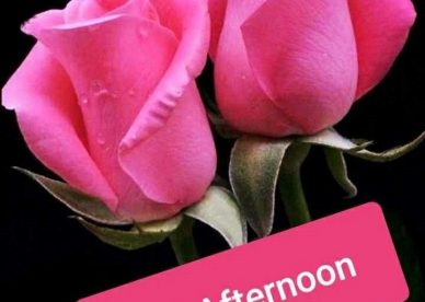Images Of Good Afternoon - Good Morning Images, Quotes, Wishes, Messages, greetings & eCard Images