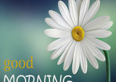 Good Morning Flower Images Free Download Good Morning Images