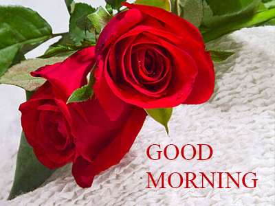 Good Morning Romantic Rose Free Download Good Morning Images