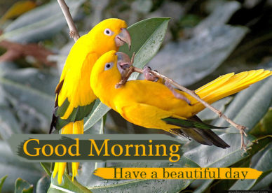 Good Morning Lovely Bird Images Good Morning Images, Quotes, Wishes, Messages, greetings & eCards
