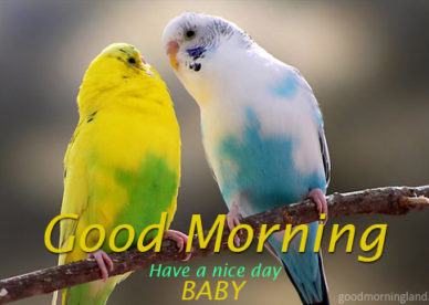 Good Morning Baby Image With Birds For Lovers Him Or Her 2017 Good Morning Images, Quotes, Wishes, Messages, greetings & eCards
