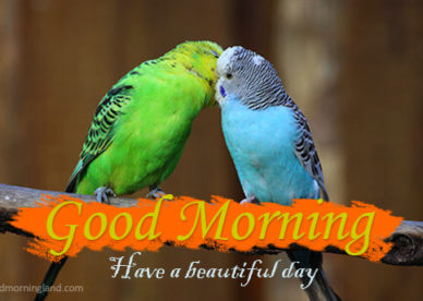 Have A Beautiful Day Morning Wishes With Romantic Birds Pics Good Morning Images, Quotes, Wishes, Messages, greetings & eCards