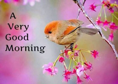 A Very Good Morning With A Beautiful Bird Images - Good Morning Images, Quotes, Wishes, Messages, greetings & eCards