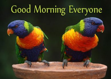 Beautiful Good Morning Everyone Birds Images - Good Morning Images, Quotes, Wishes, Messages, greetings & eCards
