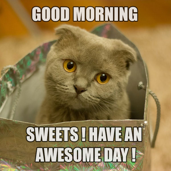 Cool Pic Of Good Morning Funny Wishes - Good Morning Images, Quotes, Wishes, Messages, greetings & eCards