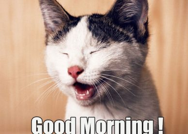 Free Funny Good Morning Pic - Good Morning Images, Quotes, Wishes, Messages, greetings & eCards