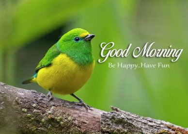 Good Morning Be Happy Have Fun - Good Morning Images, Quotes, Wishes, Messages, greetings & eCard