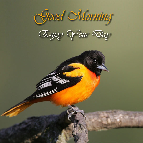 Good Morning Enjoy Your Day Birds Picture - Good Morning Images, Quotes, Wishes, Messages, greetings & eCards