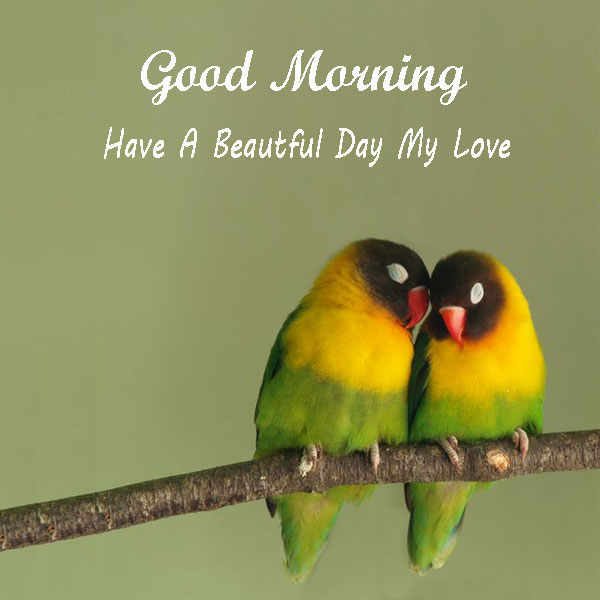 Good Morning Have A Beautiful Day My Love Birds Wishes Images - Good Morning Images, Quotes, Wishes, Messages, greetings & eCards