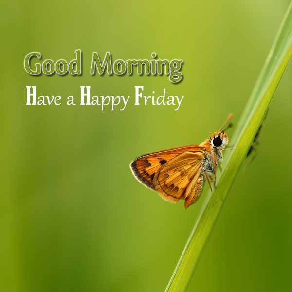 Good Morning Have A Happy Friday - Good Morning Images, Quotes, Wishes, Messages, greetings & eCards